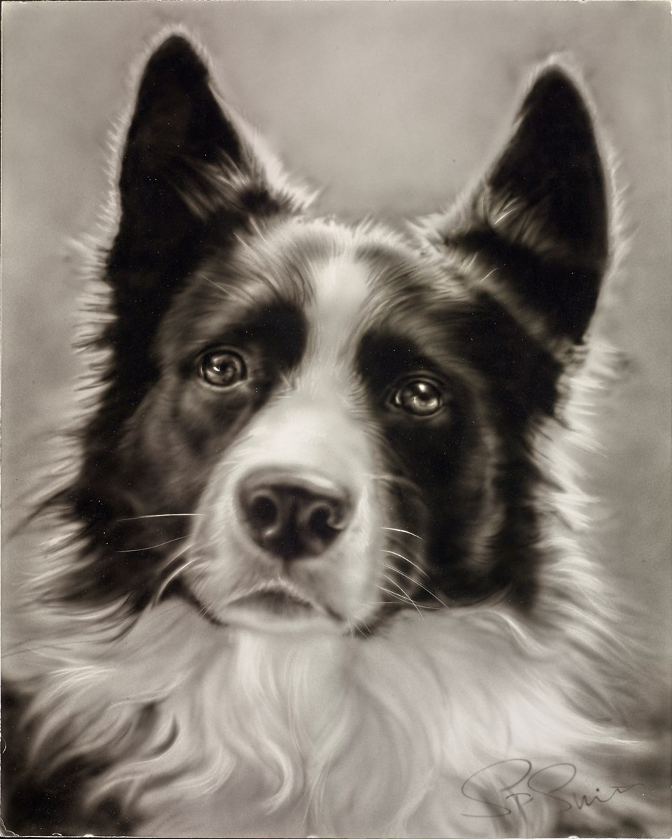 Collie by steven smith -  sized 16x20 inches. Available from Whitewall Galleries